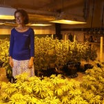 Susan Driscoll, president of Surterra Therapeutics, stands inside their 6,000-square-foot indoor growing facility where they have begun harvesting their marijuana crop to produce a high cannabidiol (CBD), low tetrahydrocannabinol (THC) Cannabis extract.