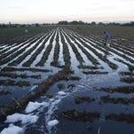 Campesinos mexicanos insisten en regar con aguas residuales