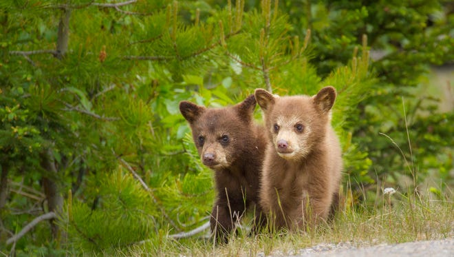 Two little bears