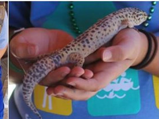 At least nine reptiles were stolen from a YMCA camp near Big Bear last week. The theft was reported July 26.