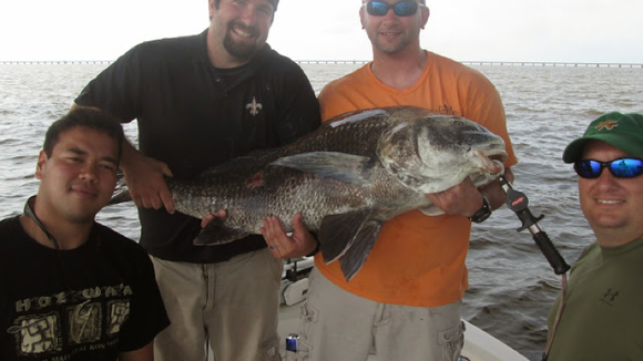 Sea monster black drum have been common.