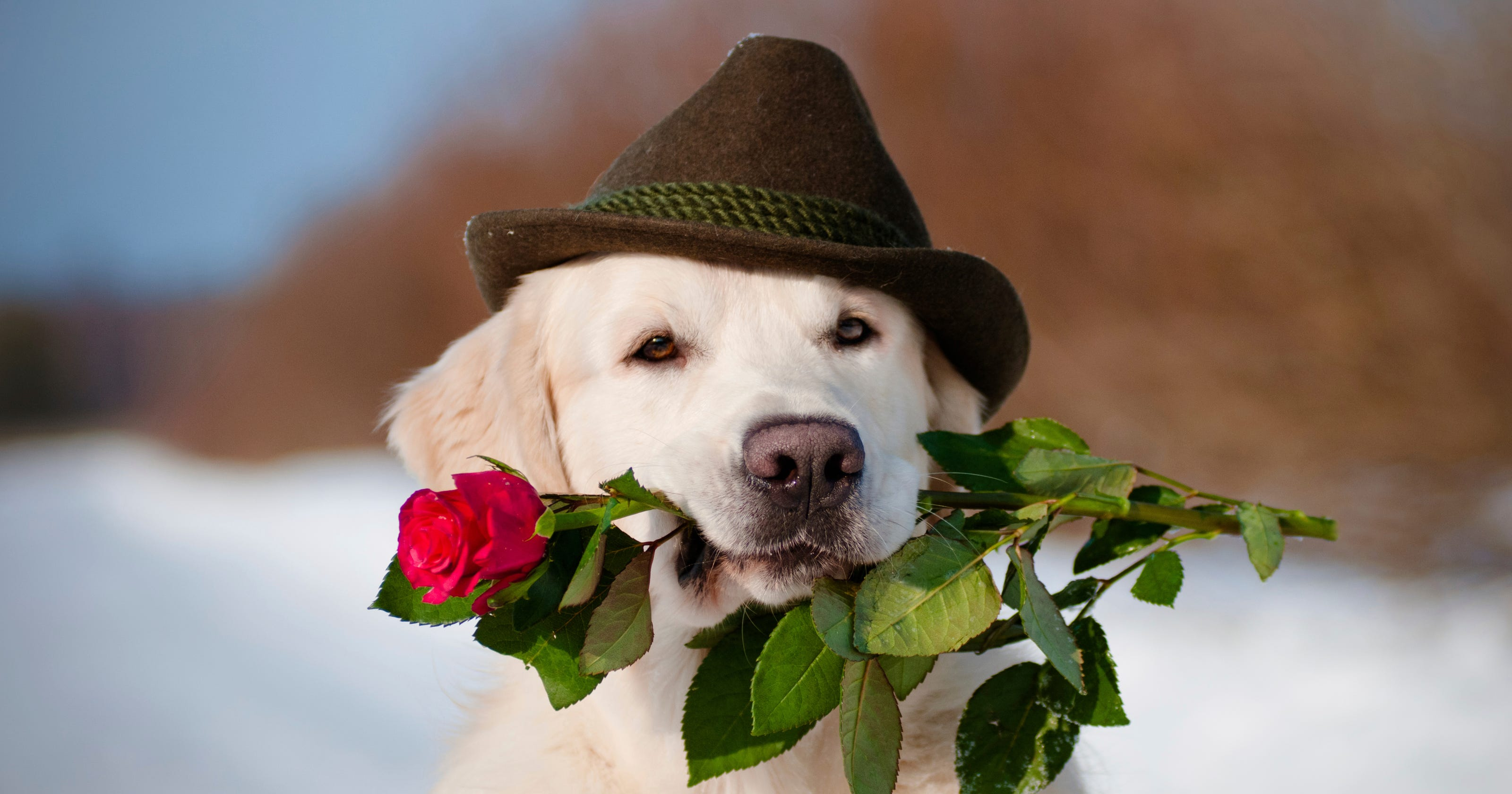 Puppies to deliver flowers on Valentine's Day