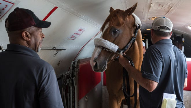 Kentucky Derby winner Justify is moved into place on a plane heading to Baltimore for the Preakness. May 16, 2018.