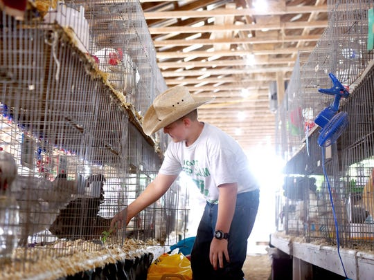 Agriculture is a major part of the Broome County Fair, a popular summertime draw for decades.