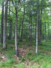 Healthy forest stands on the Epperson property.