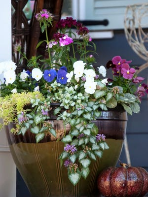 Cool season color from pansies, dianthus lamium and sedum create a container of beauty and fragrance.