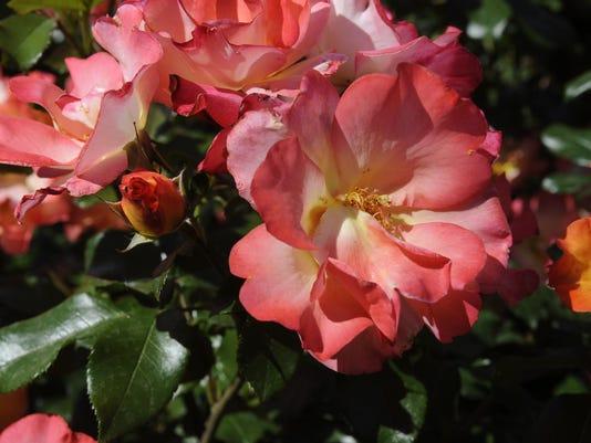 -0411_Tulare Garden_8795.jpg_20140415.jpg