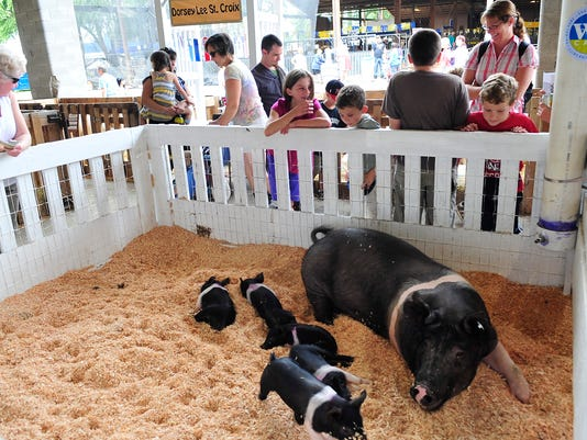Oregon State Fair pigs