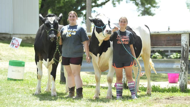 The Daubenspeck sisters -- Megan, left, and Chelsea -- begin preparing for Wednesday afternoon for the dairy steer show that evening.
