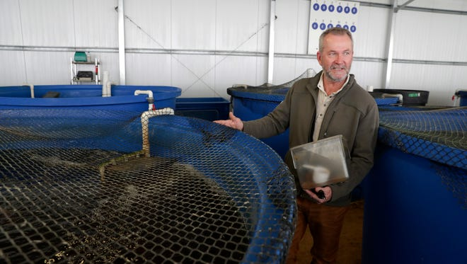 Mike Knight with the tanks of Tilapia. Farming can many forms but for Mike Knight, it includes tilapia and growing fresh vegetables year round all without dirt. Knight's aquaponics farm provides fresh vegetables to local grocery stores and restaurants year round. The farm was photographed Thursday, Feb. 8, 2018.