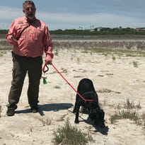 Labrador learns to sniff out crude oil to help Texas coast after oil spills