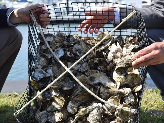 Delaware Department of Natural Resources and Environmental Control Secretary David Small and Center for the Inland Bays Director Chris Bason hold up a cage of oysters.