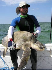 FWC biologist Blair Witherington with an endangered Kemp's Ridley sea turtle.
