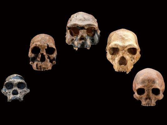 HO skull casts front.jpg