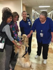From left: Marla Yetka, Judy Harris, Nicole Berens and Linda Berger with Snickers, the Denver Pet Partners therapy dog, during a visit with patients and staff at Rose Medical Center in Denver. If a golden retriever gives birth, gets stung by a bee or sprayed by a skunk, the dog's veterinarian wants to know. Scientists are studying the dogs to find out why their lifespans have gotten so short and why cancer has gotten so prevalent among them.