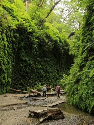 The walls of Fern Canyon rise up about 50 feet in California's Prairie Creek Redwoods State Park.
