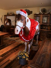 Cisco the horse is decorated for Christmas in Bev Doolittle's