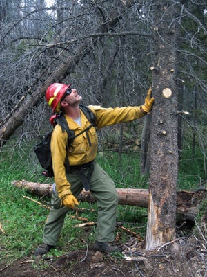 Ben Brack, a firefighter and public information officer, tests the stability of a beetle-killed tree at the site of a wildfire locally called the Keystone fire, near Albany, Wyo.