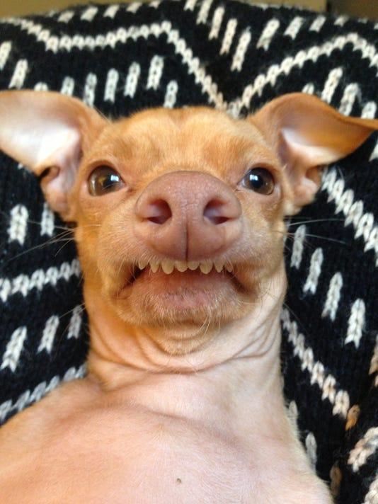 Pets-Hashtag Hounds_Schu (5).jpg