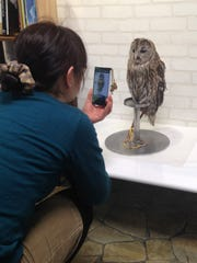 At Cafe Baron in Tokyo, customers can have coffee in the company of owls.