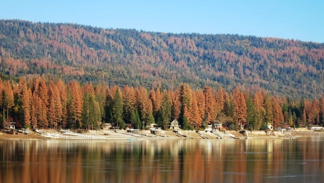 Dead trees are seen near Bass Lake in the Sierra National Forest.