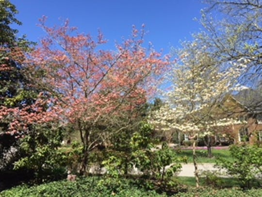 "Pink and white dogwood trees grace the yard. ""We loved"