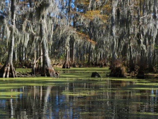 636171441747987919-swamp.jpg