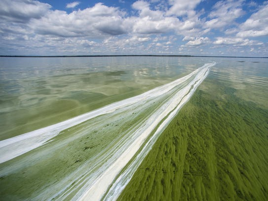 White scum indicates a post-peak portion of a cyanobacteria