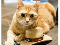 Meet the Cat of the Week