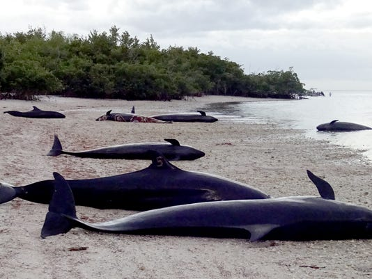 Beached Dolphins 01 Lede