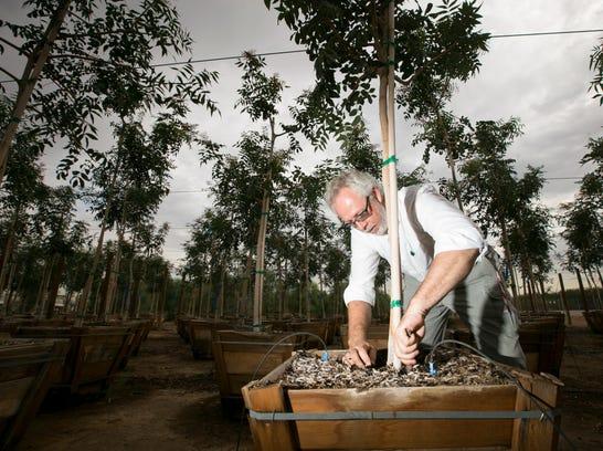 PNI 0810 Tree guru 2