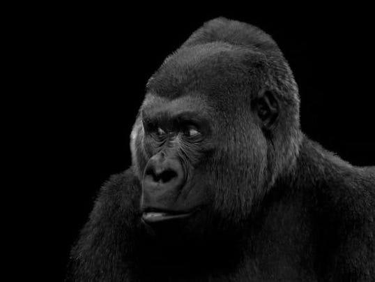 Visitors gorilla art.jpg