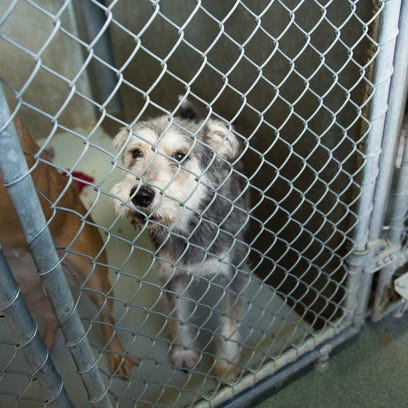 Hopeful for positive changes at animal shelter