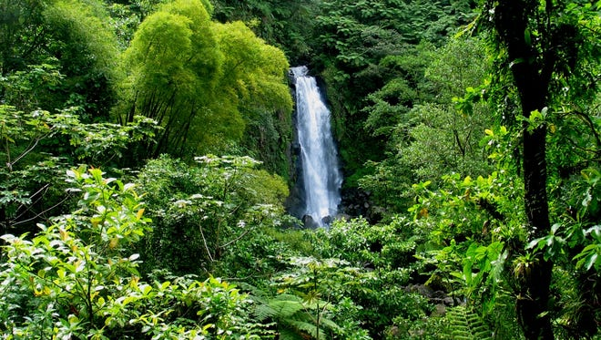 A group of experts say they found a lost city in a Honduran rainforest. (Pictured is a rainforest in Dominca.)
