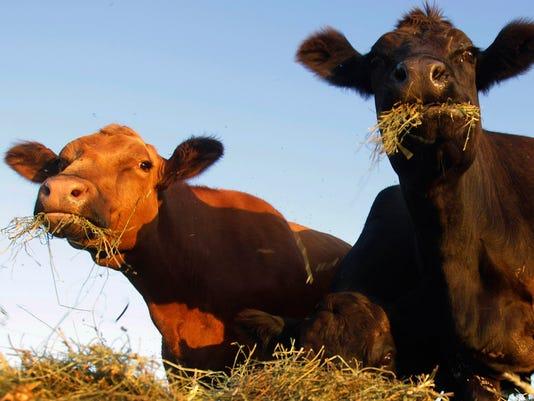 -MONBrd_05-31-2013_NewsStar_1_A006~~2013~05~30~IMG_cattle.jpg_3_1_L74996SU_L.jpg