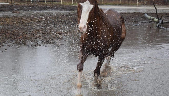 Multiple emergency agencies were called Sunday to wrangle 13 horses who were stuck on flood lands in Hendricks County.