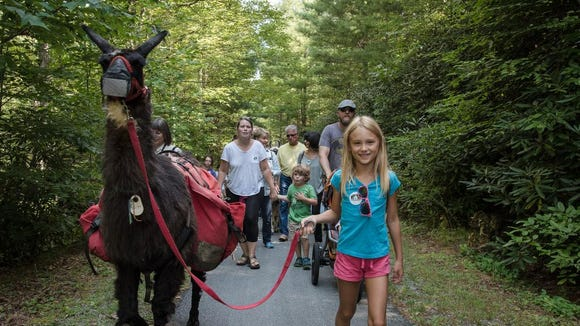 Cradle of Forestry in America, the US Forest Service, and Challenge Adventures worked together to host Tea With Llamas event in Pisgah Forest where all children were encouraged to lead llamas on a walk through the forest to a picnic lunch.
