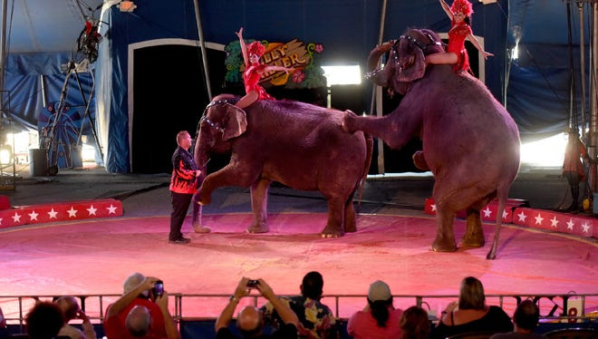 Third-generation elephant trainer Joey Frisco, 33, leads elephants Cindy and Jenny in the final act of the first show of the Kelly Miller Circus.