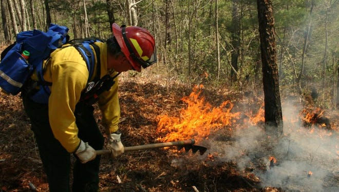 A wildland firefighters monitors a prescribed burn in Great Smoky Mountains National Park.
