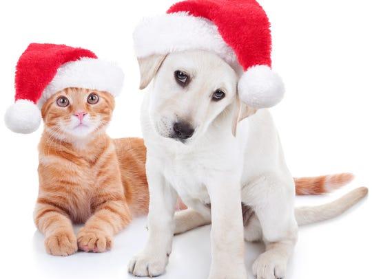 Christmas dog and cat