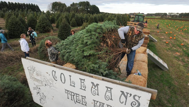 Family and friends of the Coleman Christmas Tree Farm in Odessa head out to pick out their christmas tree.