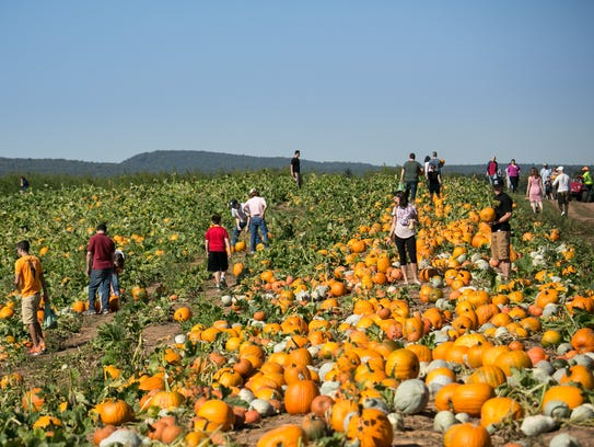 Visitors prepare for fall while walking through a field