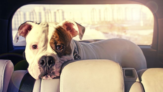 A reader needs help with his dog's abandonment issues.