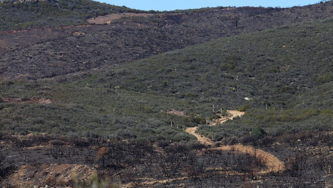 Areas that burned during August's Anza Fire contrast with green areas that escaped burning, Wednesday, November 11, 2015.