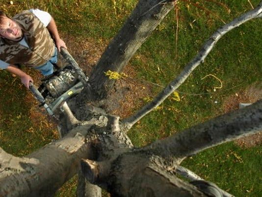 635839764801783534-treestand.JPG