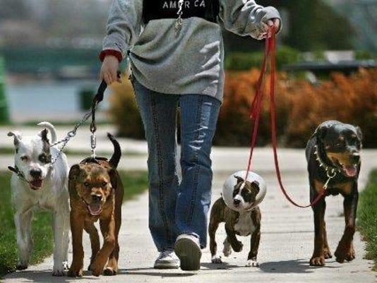 635956344067159133-dogs-dogs-.jpg