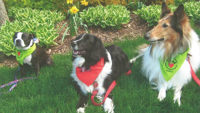 Badgerland Animal Reading and Comfort Companions dogs, from left, Betty Boop, Oreo and Bailey Rose, sit at attention.
