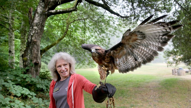 West Sound Wildlife Shelter educational coordinator Kathleen White controls the shelter's red-tailed hawk Cedar on Monday in Port Gamble, where the nonprofit plans to construct a new campus.