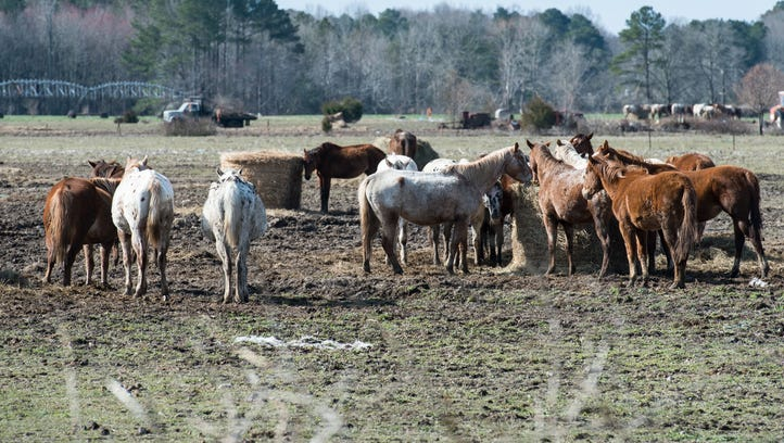 UPDATED: How you can help starving horses rescued from a Wicomico property