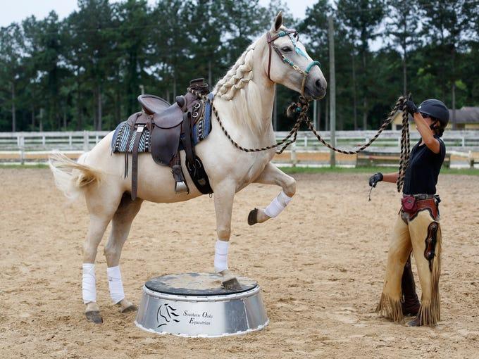 Horse trainer Marsha Hartford-Sapp works with Dream,